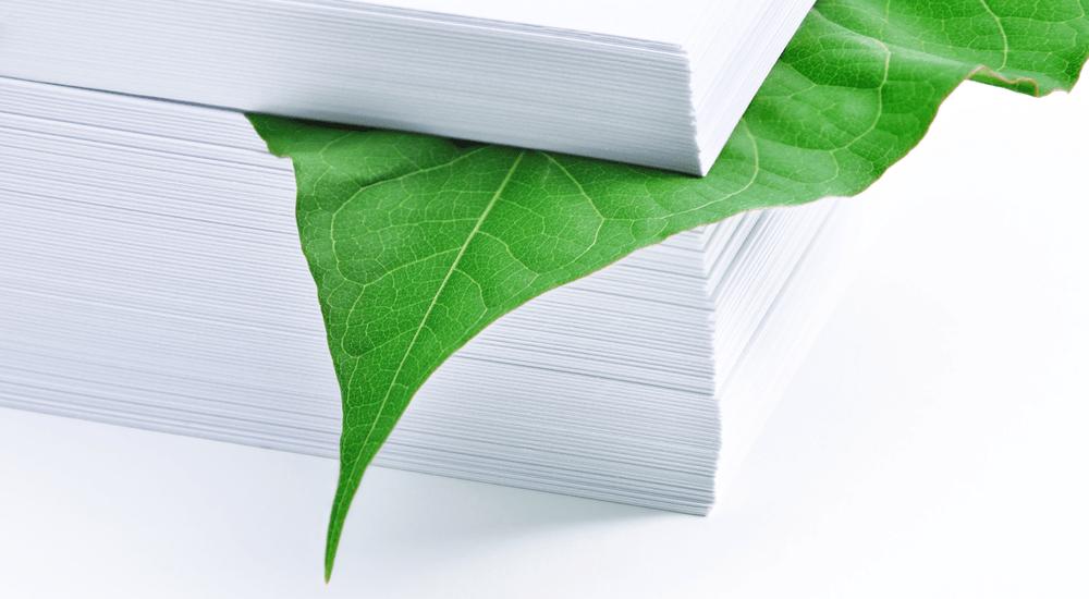 hoja de árbol dentro de pila de hojas de papel